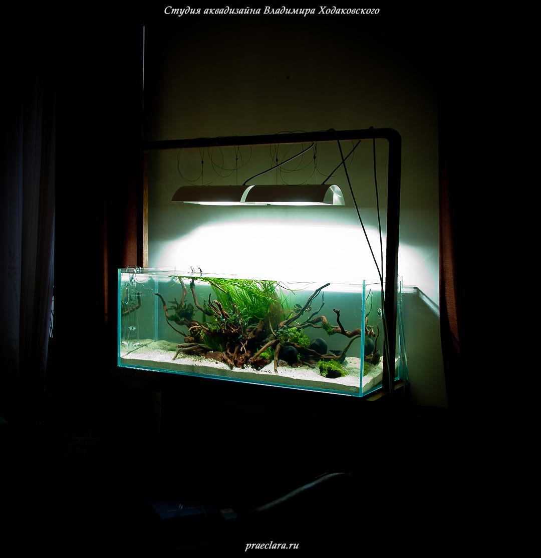 "Акваскейп 243л, ""River Flows in You"", фото после оформления"