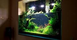 """Оформление аквариума """"Сады семирамиды"""", 530л"""