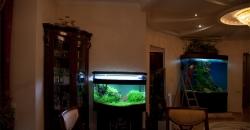 Аквариум с растениями это частичка природы у вас дома
