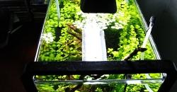 Нано-аквариум 17л, вид сверху