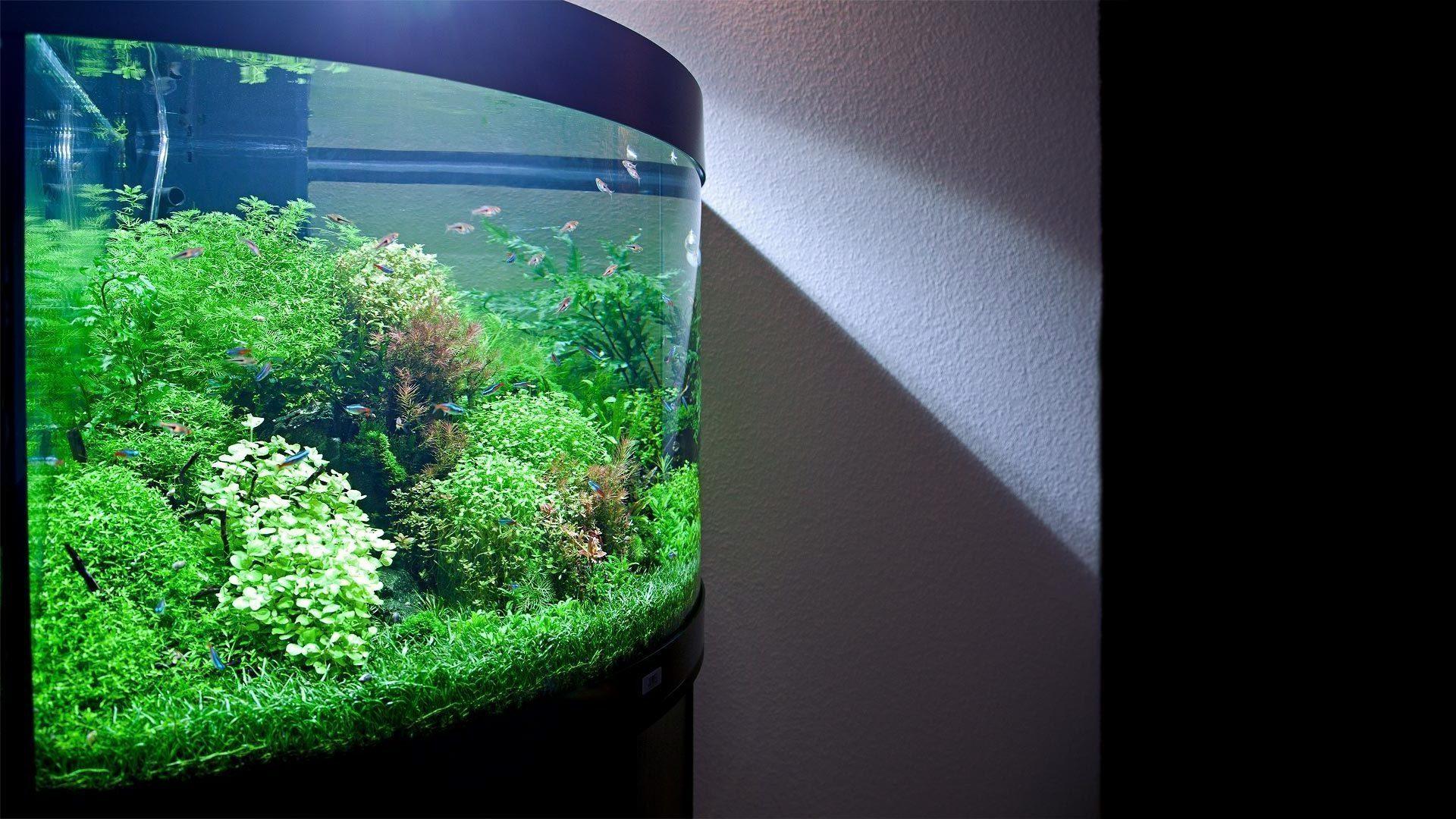 Оформление аквариума, 190л