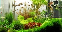 """Оформление аквариума """"Там, высоко"""", 60л."""