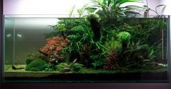 Оформление аквариума 650л