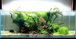 "Оформление аквариума ""River Flows in You"", 243л"