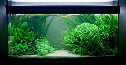 Оформление аквариума, 300л