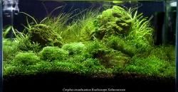 """Оформление аквариума """"Тишина"""", 40л."""