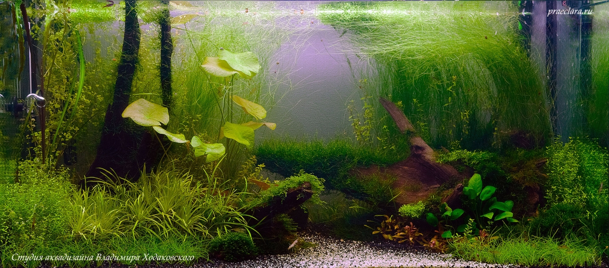 "Оформление аквариума ""Затишье"", 275л."