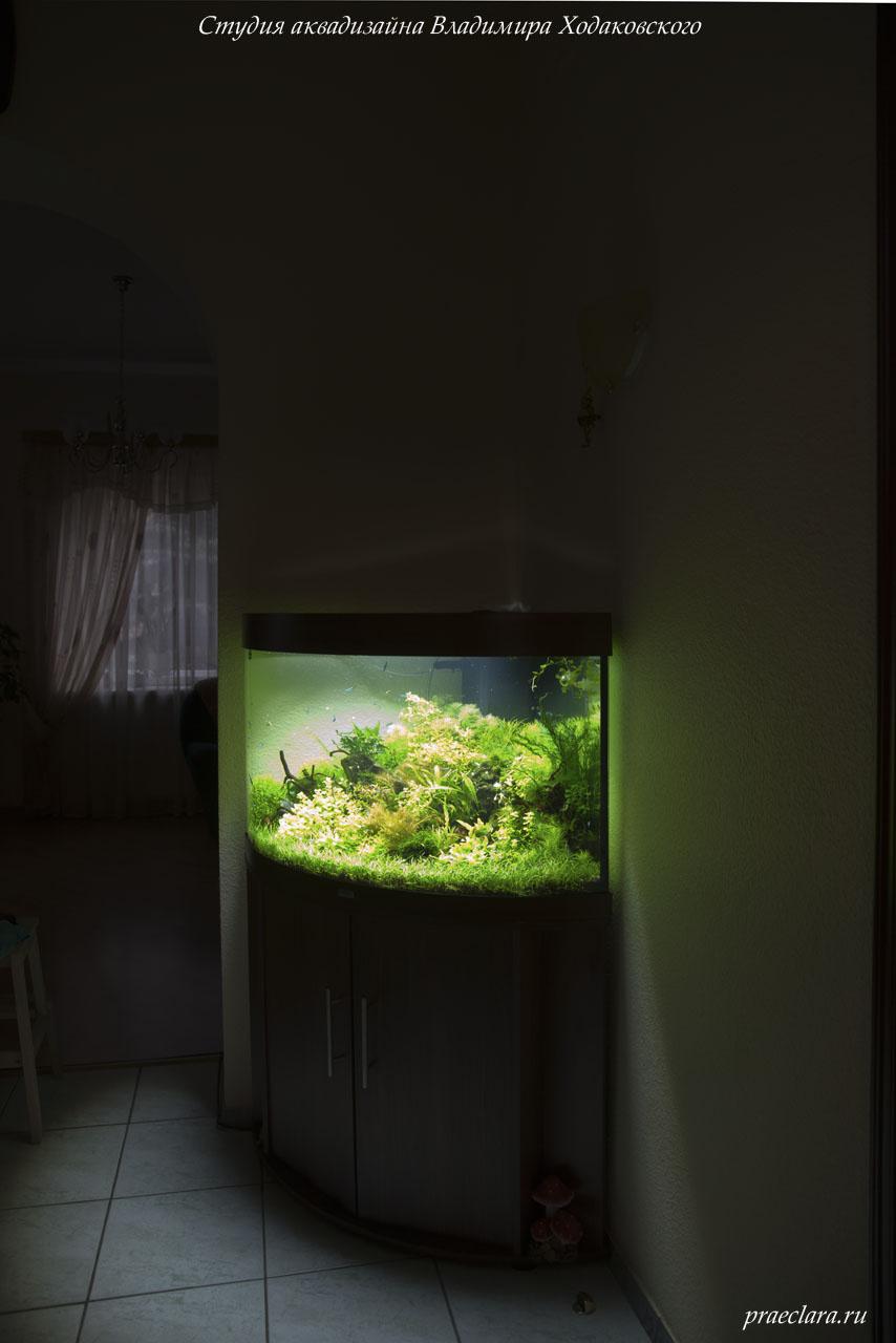 На аквариуме крышка с двумя модулями люминесцентного освещения.