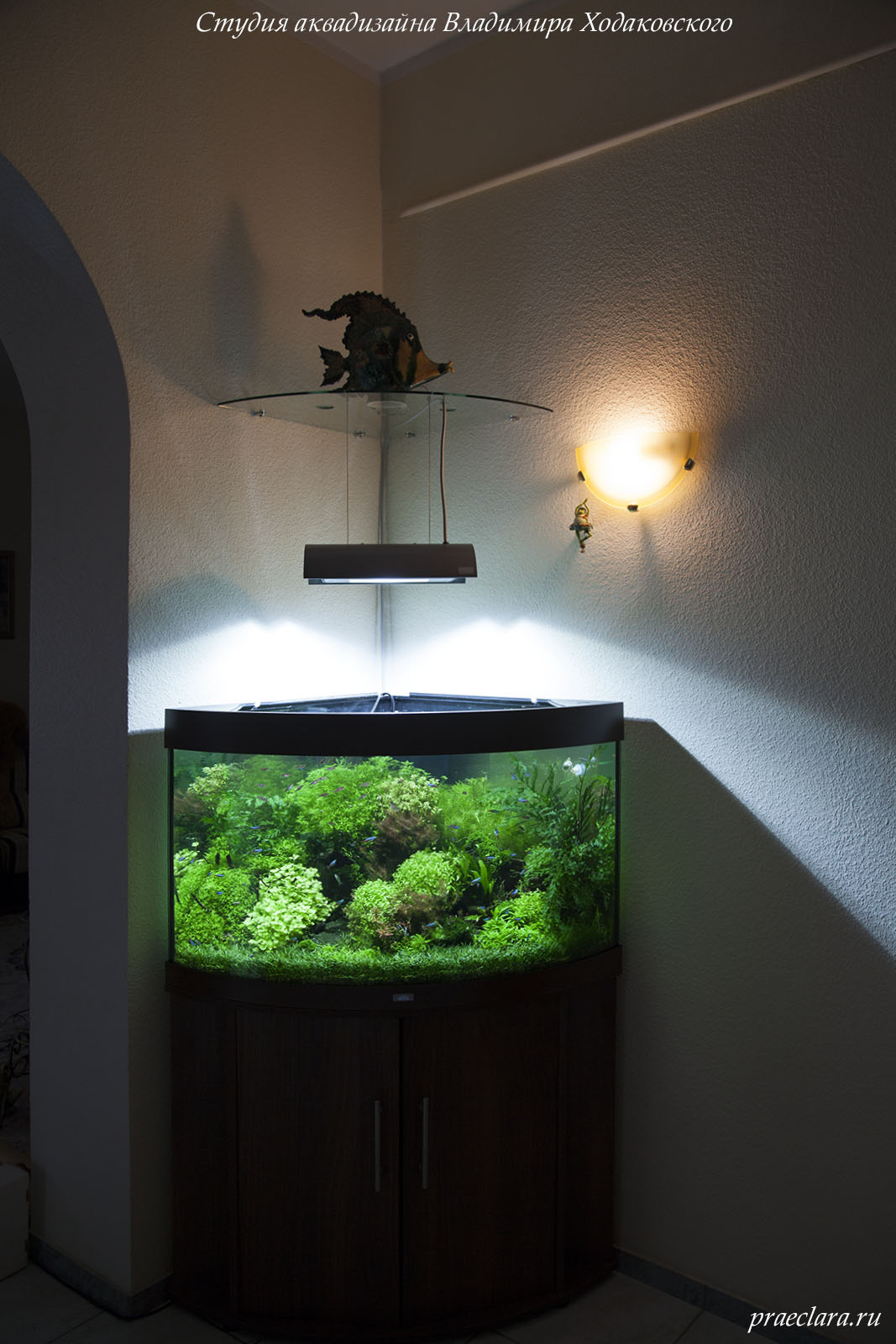 Замена источника света в аквариуме на Solar Ⅰ ADA.