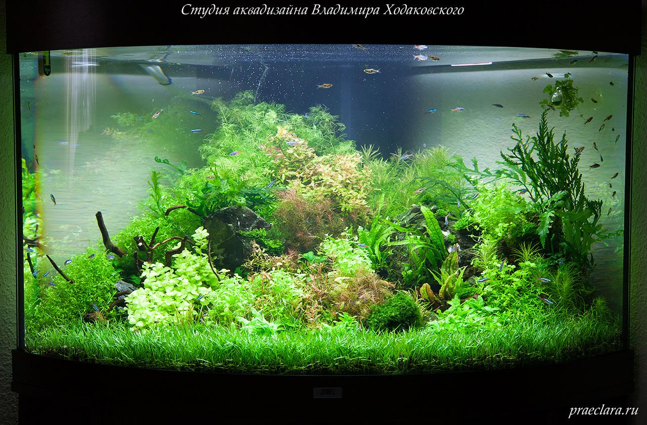 """Оформление аквариума """"Бразильская рапсодия."""", 190л, 2 месяца"""