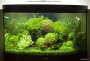 """Оформление аквариума """"Бразильская рапсодия."""", 190л, 3,5 месяца"""