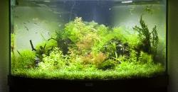"""Оформление аквариума """"Бразильская рапсодия."""", 190л, 1,5 месяца"""