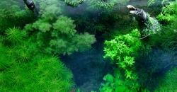 Мы обслуживаем этот аквариум и стремимся поддержать авторский замысел и идеальное состояние растений.
