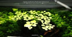 Немного плавающих растений