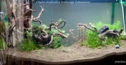 Оформление аквариума Энигма, фото 1