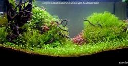Оформление аквариума Энигма, фото 6