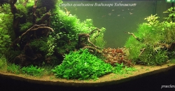 Оформление аквариума Энигма, фото 8