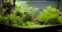 Оформление аквариума Энигма, фото 4