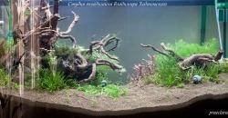 Оформление аквариума Энигма, фото 2