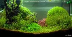 Оформление аквариума Энигма, фото 7