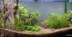 Оформление аквариума Энигма, фото 3