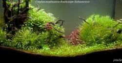 Оформление аквариума Энигма, фото 5