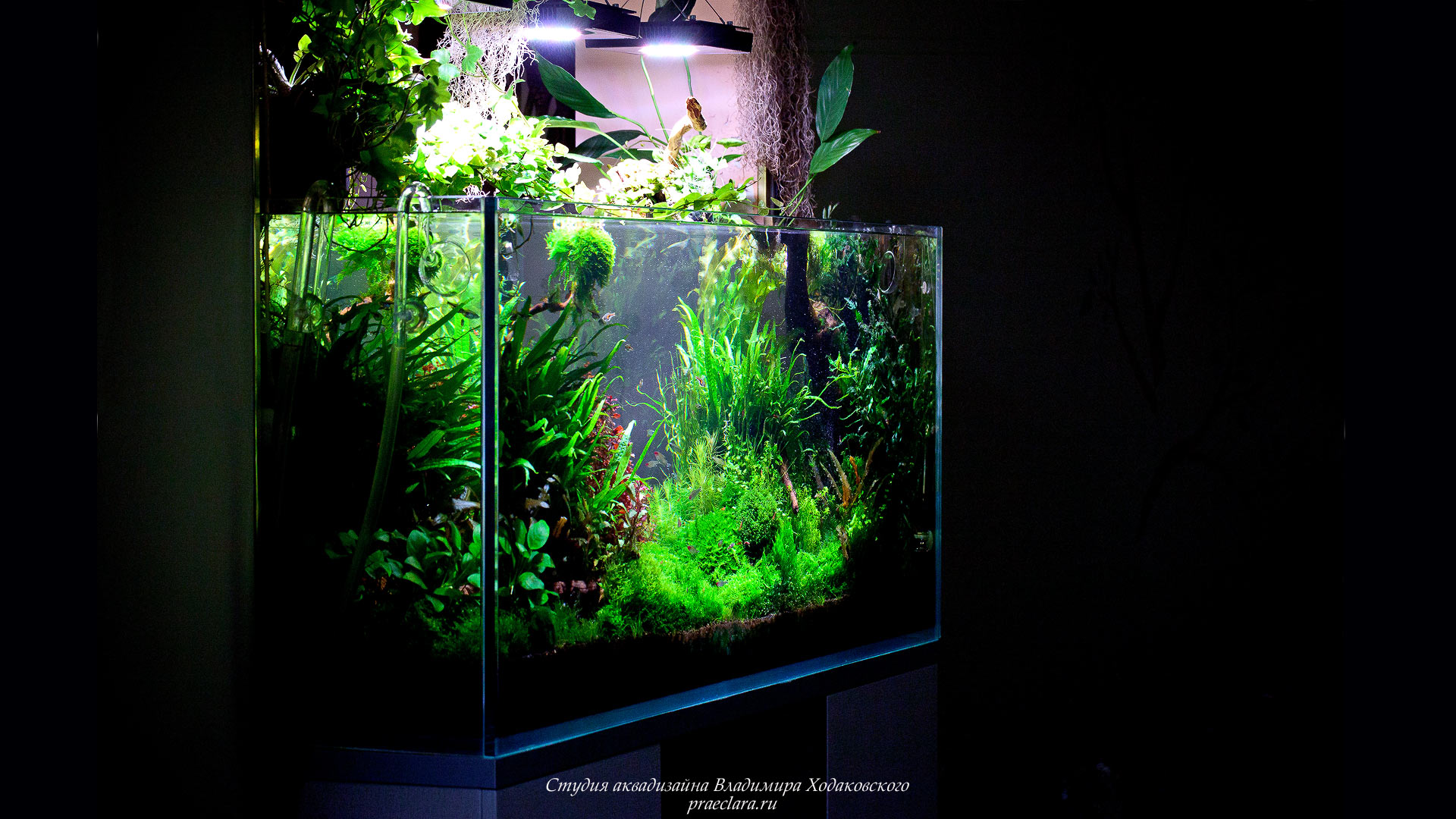 Nature aquarium 530л