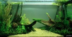 1 апреля 2012г. После первого этапа оформления аквариума