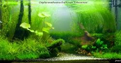 Май 2012г. Через месяц биомасса растений увеличилась уже заметно