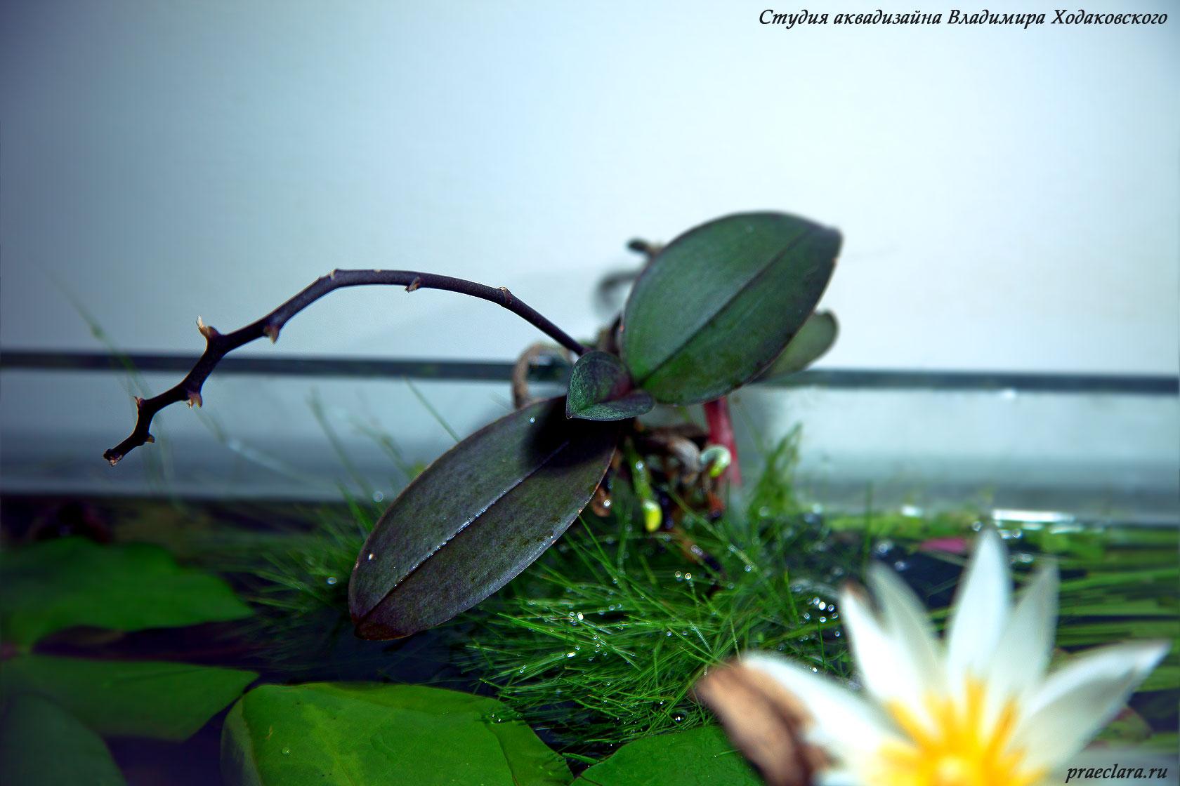 Орхидеи в аквариуме через 6 месяцев
