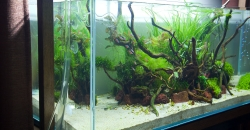 Аквариум 243л, орхидеи в открытом аквариуме
