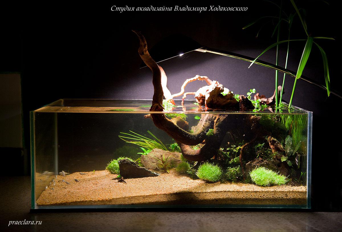 Оформление аквариума в стиле вабикуса