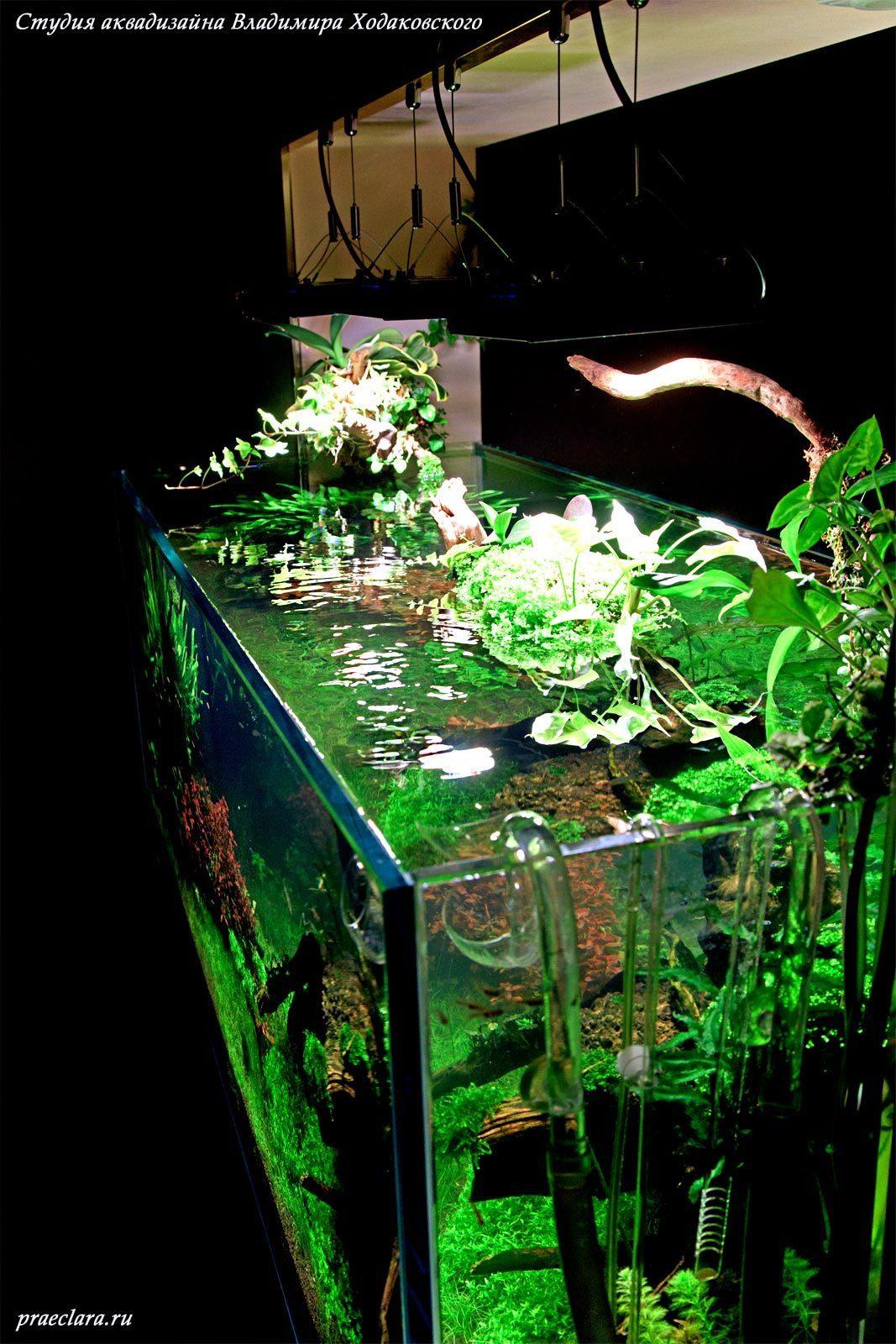 Оформление открытого Nature aquarium, Акваскейп 530л