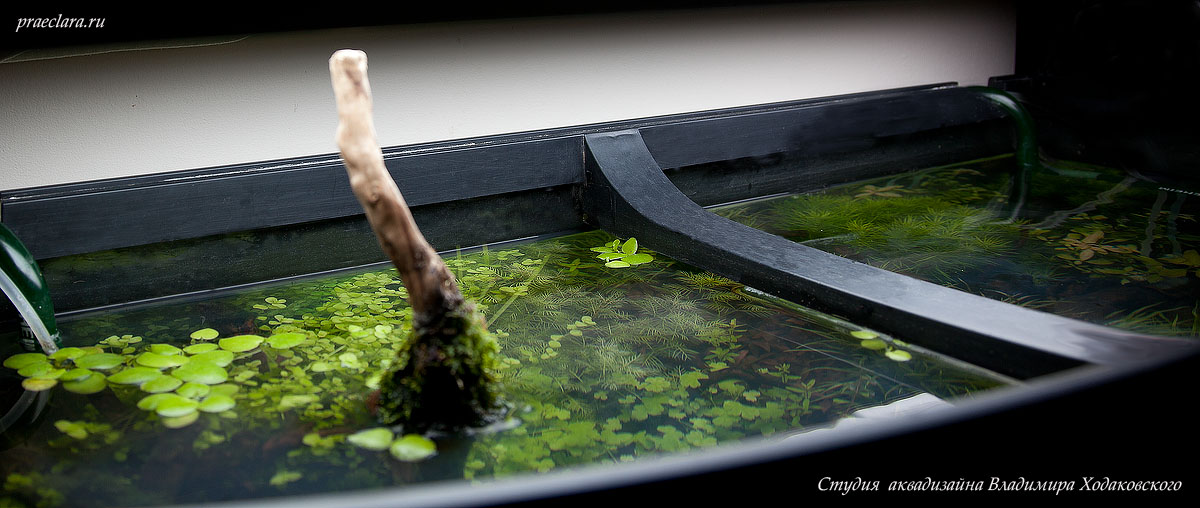 Оформление аквариума, вид сверху