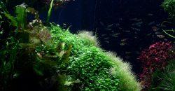 Оформление открытого аквариума