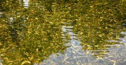 Подводная растительность и японский мох