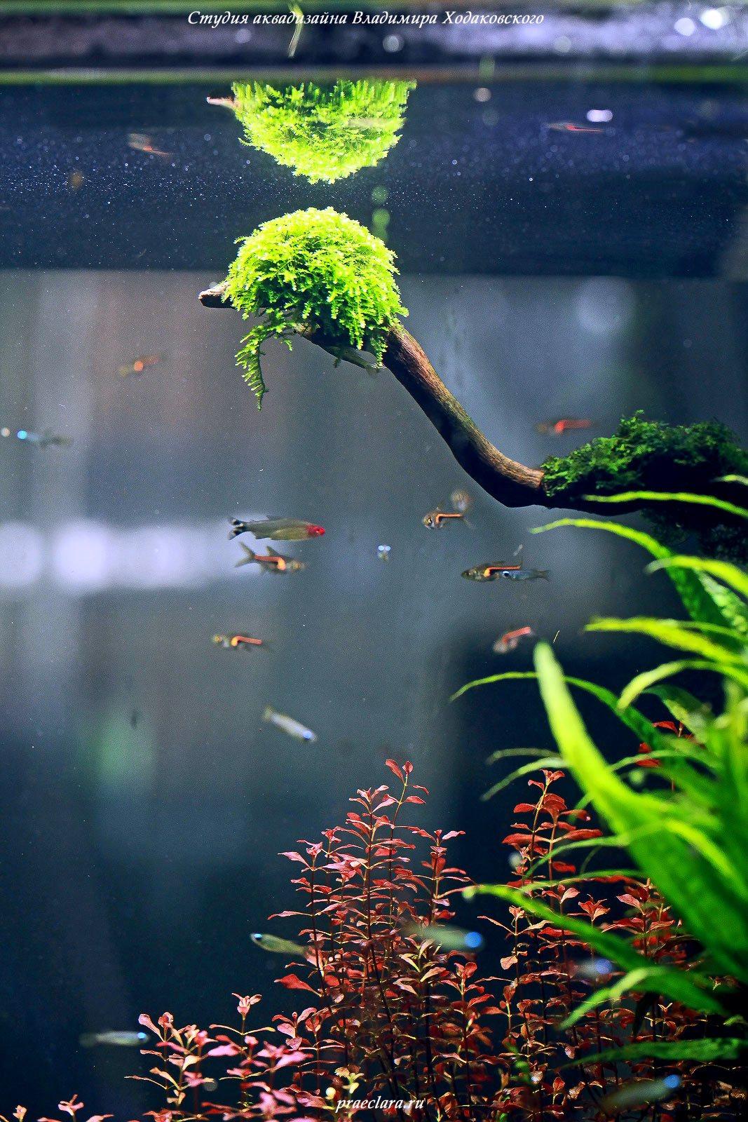 Фрагмент аквариума