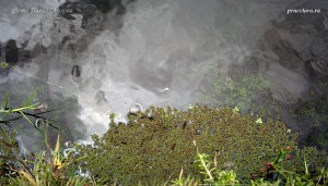 Азолла каролинская (Azolla caroliniana) и прочая прибрежная растительность