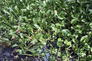 Какие-то частухи в природном биотопе