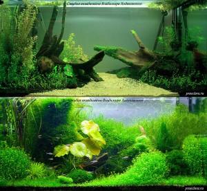 Первый день после оформления и через полгода обслуживания аквариума «Затишье»