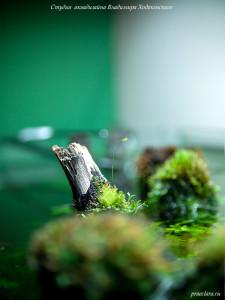 Цветок пузырчатки, коряги на поверхности аквариума, оформление аквариума