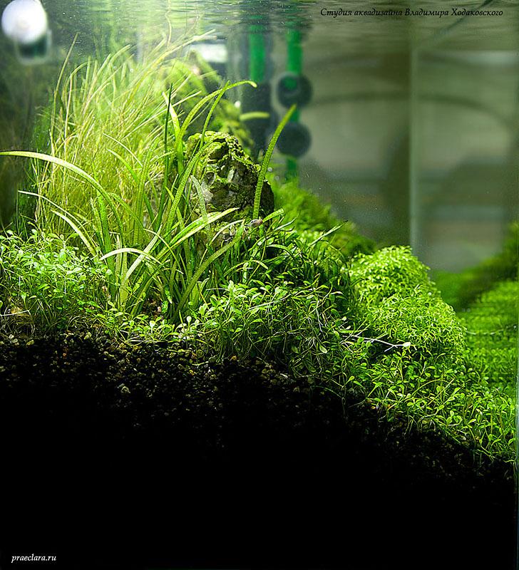 Оформление нано-аквариума аквариума, аквадизайн