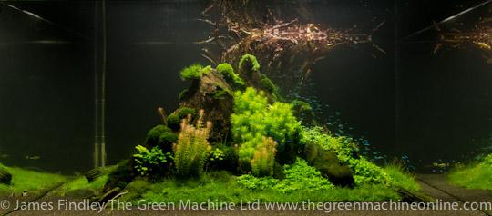 Оформление нестандартного аквариума