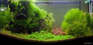 Оформление аквариума, аквадизайн