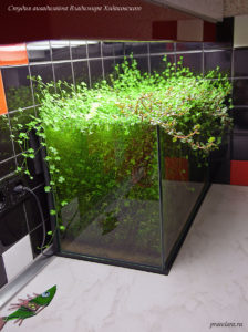 Оформление аквариума, акваскейп