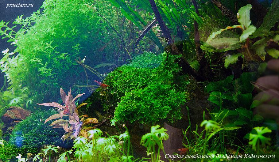 Фрагмент аквариума с растениями, 60 литров