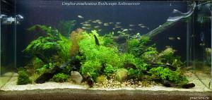 Студия аквадизайна Владимира Ходаковского оформляет аквариумы в стиле Nature Aquarium