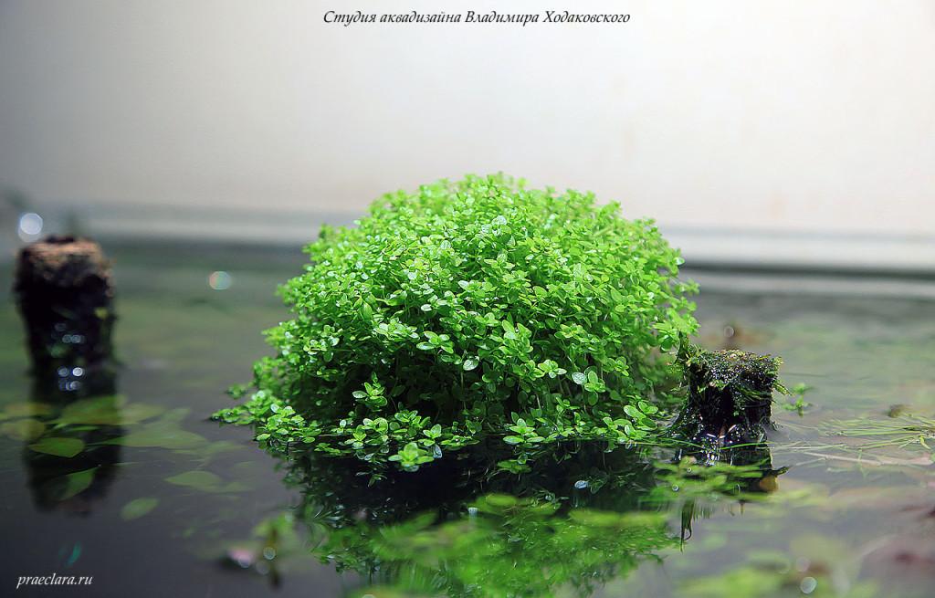 Фрагмент аквариума 180х60х60см, 650л. Фото Владимира Ходаковского.