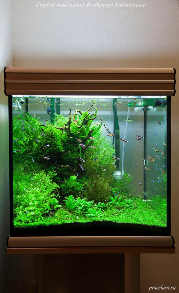 Оформление аквариума кубика, 165л