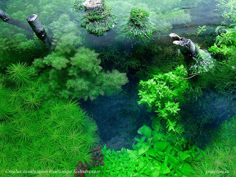 Коряги в оформлении аквариума